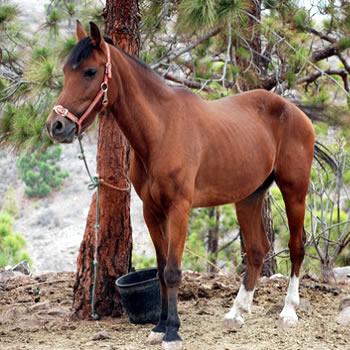 Equitación en Agaete - Gran Canaria