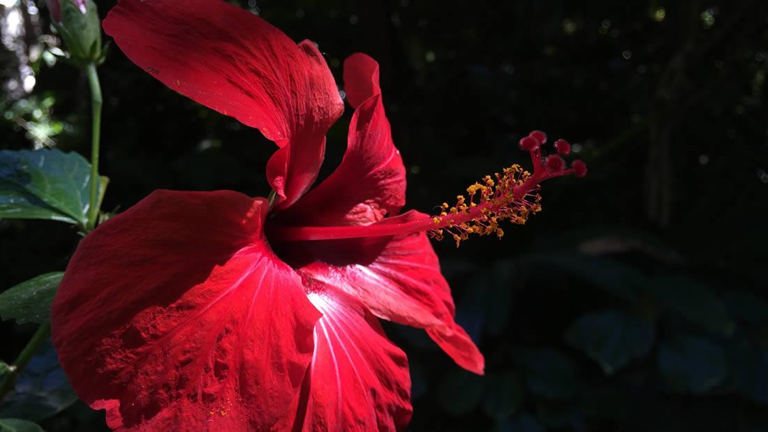 Huerto de las Flores Agaete